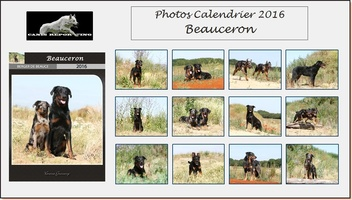 Calendrier Beauceron 2016 + Reportage complet